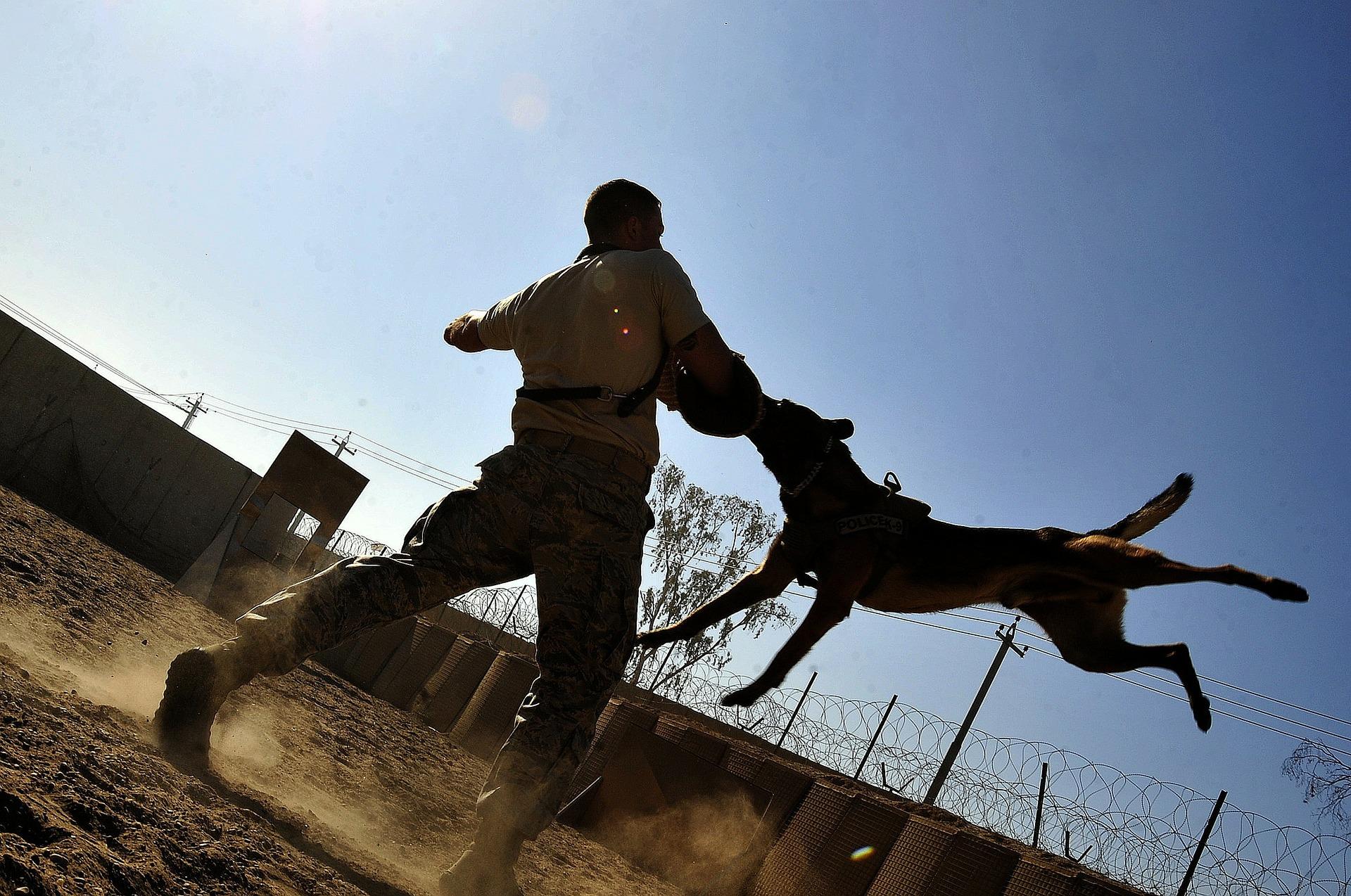 Abogado de Mordidas de Perros y Animales